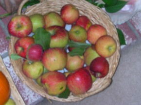 Fall Harvested Apples