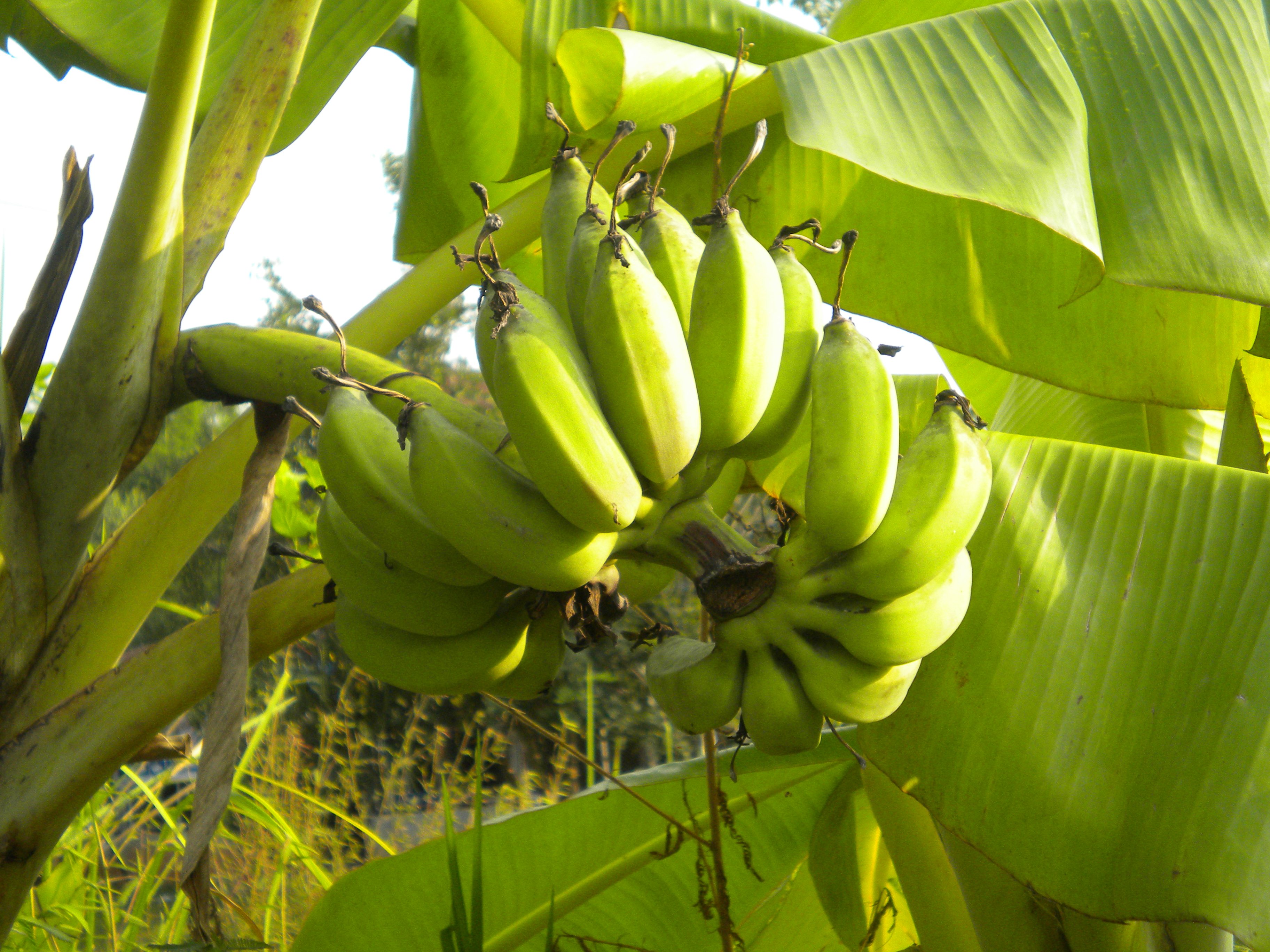 BANANAS! - A Culinary Adventure for the Entire Family ...