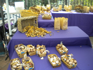Mushroom Varities